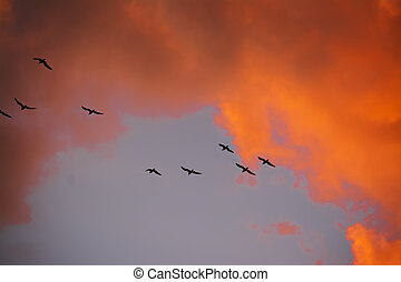 bird silhouettes flying at sunset