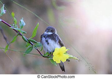 bird sits on a flower with sunny hotspot - bird sits on a...