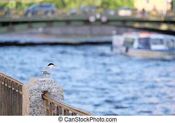 Bird sits on a parapet on a river embankment
