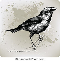 Bird sitting on a branch, Hand draw