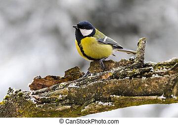 Bird sitting on a tree branch.