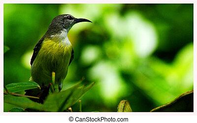 Bird sitting on a tree
