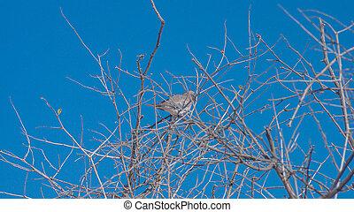 bird sitting on dry branch of a tree