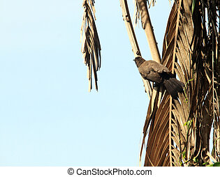 bird sitting on the branch of tree