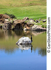 Bird sitting on the rock on the golf course.