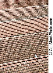 Bird sitting on the roof