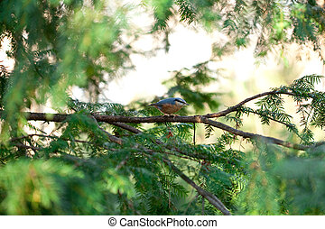 Bird sitting on tree branches in the autumn forest