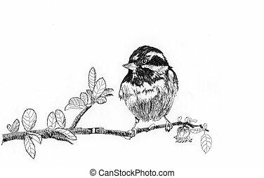bird sketch on paper white background