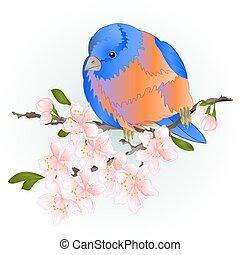 Bird small thrush Bluebird on a sakura cherry branch watercolor vector.eps