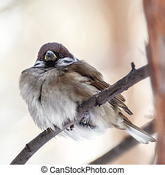 Bird sparrow close-up