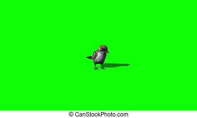 bird sparrow idle - green screen