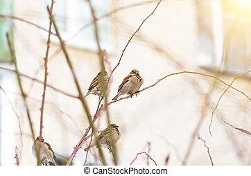 Bird sparrow spring