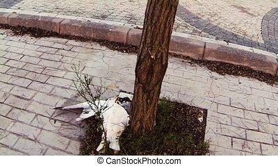 bird - Dead bird on the sidewalk