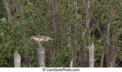 Bird struggles with the windy - Bird tries to keep balance...