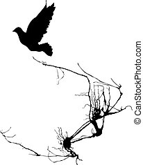 Bird Takes Wing - Shadow of a bird takes wing from the...