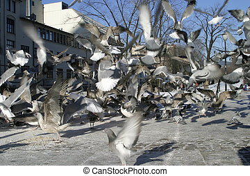 Bird Texture