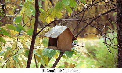 Bird the jay in the bird feeder - Bird jay in the wooden...