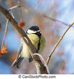 Bird tit sitting on a branch