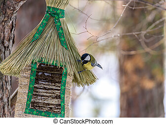 bird tit sitting on the feeder