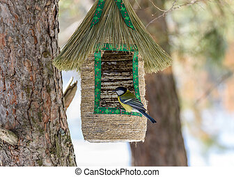 bird tit sitting on the feeder