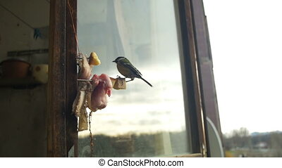 Bird Titmouse Eats Bread and Lard on a Wooden Window Sill. Slow Motion