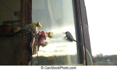 Bird Titmouse Eats Bread and Lard on a Wooden Window Sill. Slow Motion