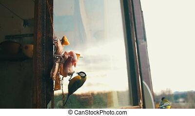 Bird Titmouse Eats Bread and Lard on a Wooden Window Sill....