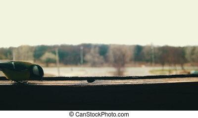 Bird Titmouse Eats Bread on a Wooden Window Sill. A titmouse...