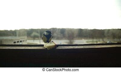 Bird Titmouse Eats Bread on a Wooden Window Sill. Slow...