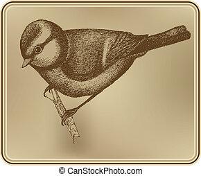 Bird titmouse, hand drawing. Vector illustration.