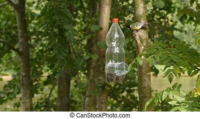 bird titmouse, on homemade bird feeder, slow motion
