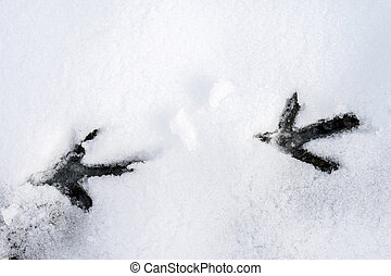 Bird traces on snow