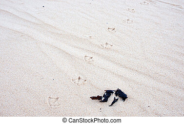 bird tracks in the sand