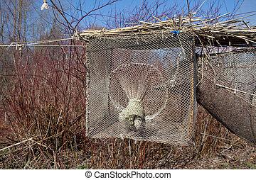 Bird trap in Vente Cape