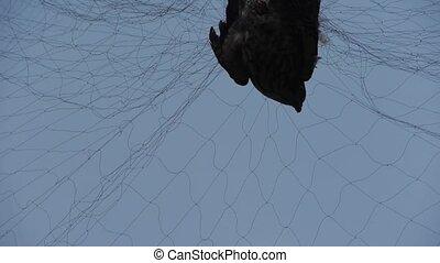 Bird trapped in net, struggling to die in blue sky like fail...