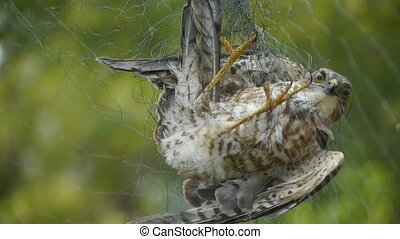 Bird trapped in net, struggling to die in green forest like fail loser. Shaking leaves of tree canopy in wind. destruction of ecological balance.