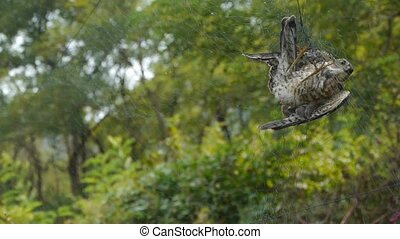 Bird trapped in net, struggling to die in green forest like ...