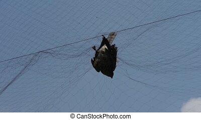 Bird trapped in net,struggling to die in blue sky like fail loser.