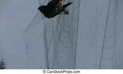 Bird trapped in net,struggling