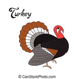 Bird turkey vector illustration