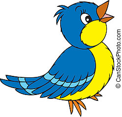 bird - blue and yellow bird, on a white background