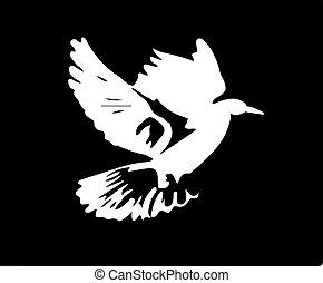 bird vector illustration isolated on background