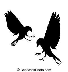 Bird vector silhouettes illustration