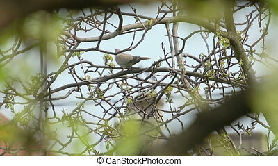 Bird - Brown colored bird sitting on freshly blossomed tree