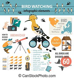 Bird watching infographic template.