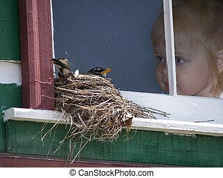 Little girl in window watching a bird in a nest.