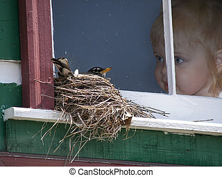 Bird Watching - Little girl in window watching a bird in a...