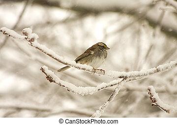 Bird Weathering Storm