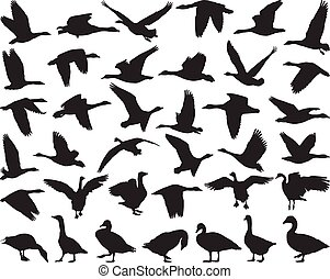 Bird wild geese - Thirty-six black isolated vector...