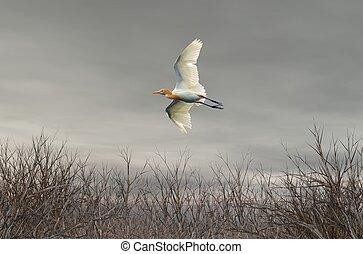 Bird wilderness desert landscape